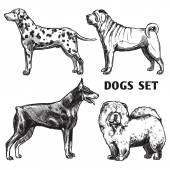 Sketch Dogs Portrait Set — Stock Vector