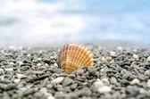 Shell en playa tropical — Foto de Stock