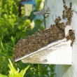 Bees near a beehive — Stock Photo #59093551