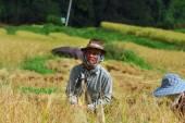 Harvest field — Stock Photo