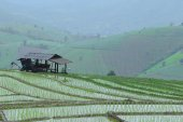 The farmer's hut — Stock Photo
