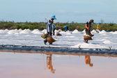 Salt farming — Stock Photo