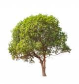 Jambul (Syzygium cumini) also known as Jambolan plum, Java plum, — Stock Photo