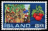 Iceland stamp — Stock Photo