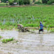 Asia Farmer using tiller tractor in rice field — Stock Photo #51908911