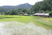 Veld rijstvelden in doi inthanon, ban mae klang luang chiangmai — Stockfoto