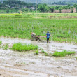 Asia Farmer using tiller tractor in rice field — Stock Photo #52309663