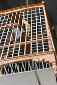 Passereau de style thaï cage — Photo