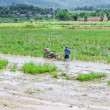 Asia Farmer using tiller tractor in rice field — Stock Photo #53227853