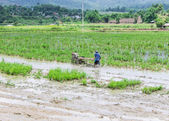 Asia Farmer using tiller tractor in rice field — Stockfoto