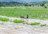 Asia Farmer using tiller tractor in rice field — Stockfoto
