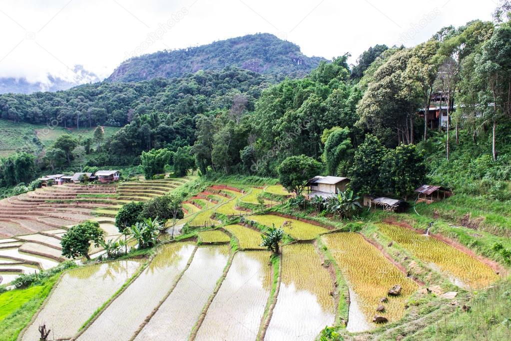 Arroz terrazas de campo en doi inthanon ban pha mon for Terrazas de campo