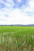 Green rice field with beauty sky in Thailand — Stock Photo