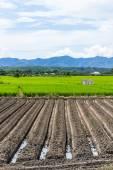 Risfält med berg i Thailand, Asien — Stockfoto