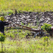 Asia Farmer using tiller tractor in rice field — Stock Photo #76377179