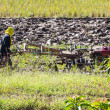 Asia Farmer using tiller tractor in rice field — Stock Photo #76380161