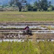 Asia Farmer using tiller tractor in rice field — Stock Photo #77290666
