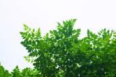 Branch of tree — Stock Photo