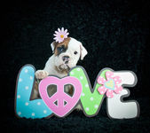 Flower Child Bulldog Puppy — Stock Photo