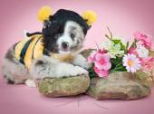 Bumble Bee Puppy — Stock Photo