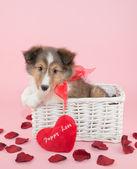 Puppy Love — Stock Photo