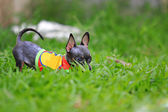 Puppy in green grass — Stock Photo