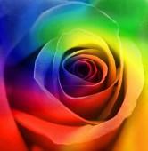 Rainbow Rose Background — Foto de Stock
