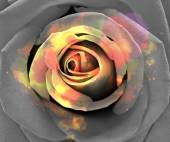 Abstract roses background. — Stock Photo
