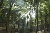 Sunbeams in woods. Sun rays — Stock Photo