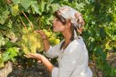 Young woman, vine grower, in the vineyard. — Stock Photo