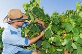 Young man, vine grower, in the vineyard. — Stock Photo