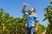 Heat exhausted young farmer cooling himself in vineyard. — Stock Photo