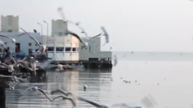 Seagulls circle over the waters — Stock Video