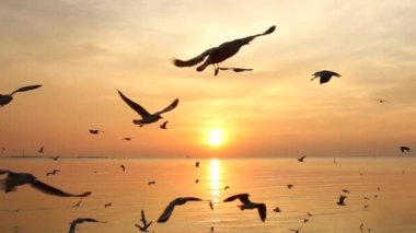 Troupeau de mouche mouettes sur mer au coucher du soleil — Vidéo