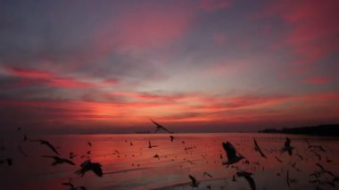 Flock of Seagulls fly over sea in twilight sky — Stock Video