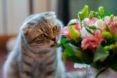Cat licks wedding bouquet at home — Stock Photo