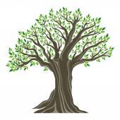 美しいオリーブの木 — ストックベクタ