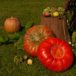 Autumn still life in the garden — Stock Photo #53928011