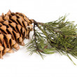The cedar cone with a branch — Stockfoto #62278051