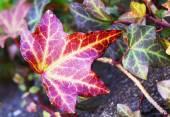 Beautiful leaves in Japan — Foto Stock