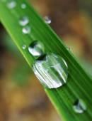 水滴在绿色的草地上 — 图库照片