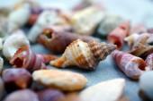Güzel deniz kabuğu beton zemin — Stok fotoğraf