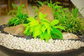 Green bush in the rocks — Stock Photo