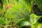 Пальмовый лист в саду — Стоковое фото