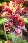 Green bush with red flowers — Stock Photo