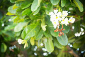 Green bush with white flowers — Stock Photo