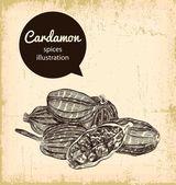 Ceylan cardamon — Stock Vector