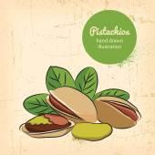 Pistachios illustration — Stock Vector