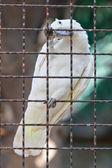 Cockatoo — Stock Photo