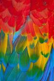 Scarlet macaws — Stock Photo